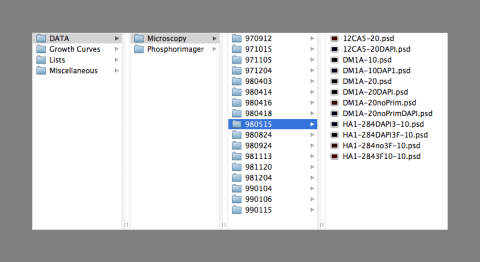 visual example of file naming best practices/organization
